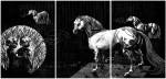 HAIDE (Die singenden Pferde), 2014Holzschnitt-Triptychon, 5er Auflage Druck 3x 97 x 67 cm, 3x 99 x 69 cm€ 2100,-