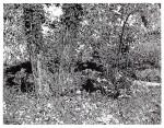 Paradies 2012Linolschnitt, Auflage 5 + 2Gedruckt von Philipp Hennevogl. Kozo & Abaca handgeschöpftes Papier (Gangolf Ulbricht)Druck 100 x 130 cm / Papier 130 x 150 cm€ 6200