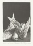 (Vogel)Schablithographie, 2013Auflage 3019,5 x 14,0 cm, 450,- €